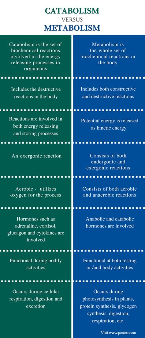 Difference Between Catabolism and Metabolism | Definition