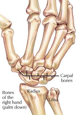 Joints of the Upper Limb ~ Anatomy for MSP